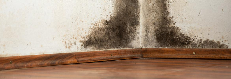 mould-asbestos-damage